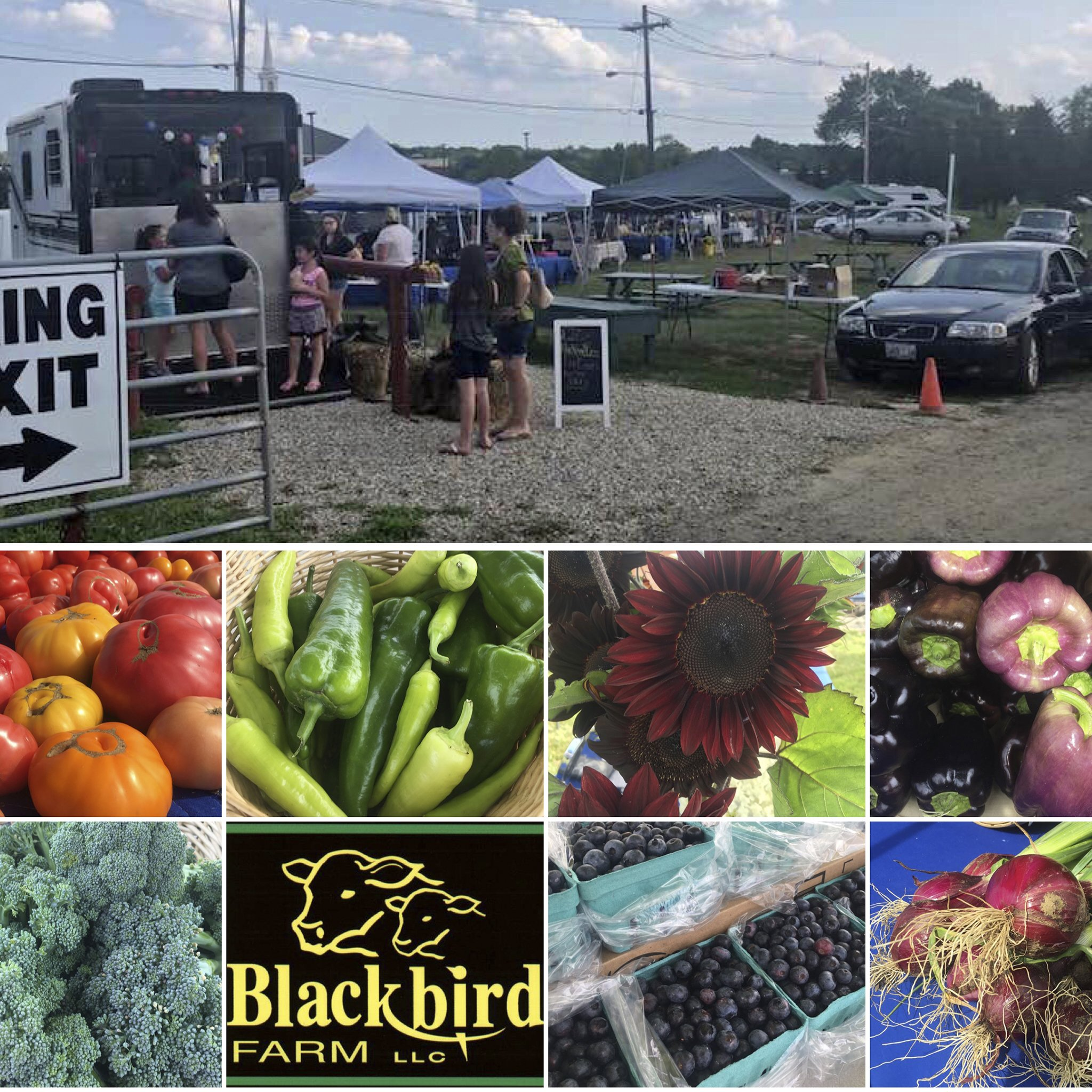 Blackbird Farm Farmers Market